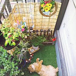リビング/風鈴/夏の庭/ベランダビアガーデン/狭いベランダ...などのインテリア実例 - 2018-08-03 23:02:16