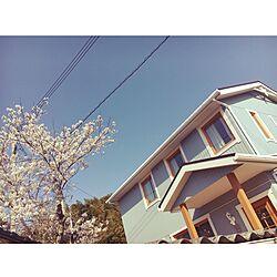 満開/春/スウェーデンハウス /桜/玄関/入り口のインテリア実例 - 2017-04-14 08:57:48