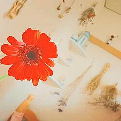 壁/天井/お花のある暮らし/お花/ナチュラル/ガーベラ...などのインテリア実例 - 2019-02-15 20:22:23