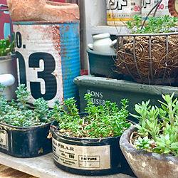 玄関/入り口/多肉植物/植物が好き/植物のある暮らし/ベランダ風景のインテリア実例 - 2018-04-22 22:10:52