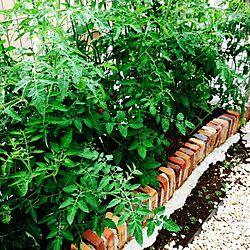 玄関/入り口/家庭菜園/レンガのインテリア実例 - 2015-07-24 19:19:30