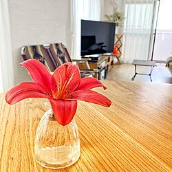 植物のある暮らし/マンションリノベ/マンションリノベーション/夫婦2人暮らし/しっくい壁DIY...などのインテリア実例 - 2021-06-08 10:49:06