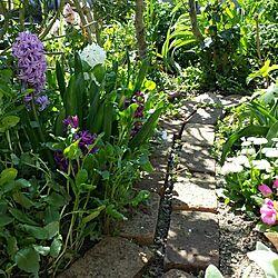 玄関/入り口/イングリッシュガーデン/ナチュラルガーデン/庭の花/植物...などのインテリア実例 - 2015-03-28 10:52:16