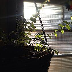 壁/天井/DIY/リノベーション/平屋/観葉植物 のインテリア実例 - 2014-04-15 12:33:21