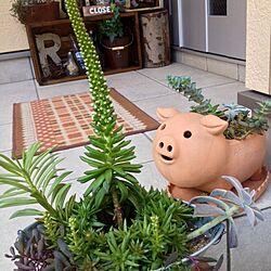 つぼみ/多肉寄せ植え/植物/多肉植物/多肉部♡のインテリア実例 - 2013-10-31 10:10:37