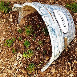 玄関/入り口/DIY/リメイク/植物/多肉植物...などのインテリア実例 - 2014-05-12 06:08:21