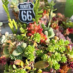 多肉植物/寄せ植え/ブリキ鉢/玄関/入り口のインテリア実例 - 2021-02-22 20:20:28