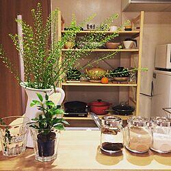 キッチン/STAUB/ルクルーゼ/土鍋/カフェ風...などのインテリア実例 - 2016-03-27 13:02:13