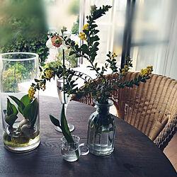 机/花のある暮らし/庭の花/季節の花/昭和の家...などのインテリア実例 - 2021-03-29 10:23:53
