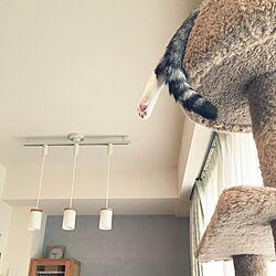 壁/天井/マンション/ナチュラル/シンプルが好き/猫と暮らす...などのインテリア実例 - 2016-11-15 09:43:29