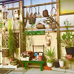 植物のある暮らし/孫バカです◡̈⃝︎⋆︎* ◡̈⃝︎⋆︎*/ガーデニング◡̈⃝︎⋆︎* ◡̈⃝︎/閲覧ありがとう꒰୨୧꒱•͈ᴗ•͈꒰୨୧꒱/小さな庭*( ᐛ )( ᐖ )゚.*❁...などのインテリア実例 - 2021-03-31 08:04:00