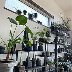 ダイソー/カフェ風/インダストリアル/インダストリアルに憧れる/ダイソーの植物...などのインテリア実例 - 2020-11-30 13:20:23