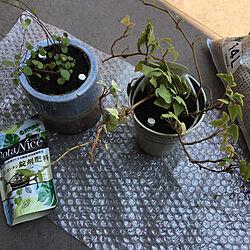 BotaNice/虫対策/植物のある暮らし/多肉植物/観葉植物...などのインテリア実例 - 2021-06-11 11:27:30