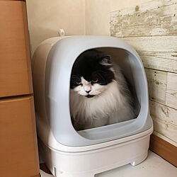 猫ちゃん想い/ニャンとも/ねこと暮らす。/ねこのいる日常/猫トイレ...などのインテリア実例 - 2021-06-10 18:29:42
