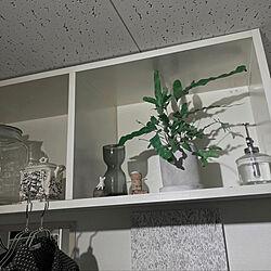 観葉植物/ナチュラル/IKEA/一人暮らし/1K...などのインテリア実例 - 2021-02-10 22:10:13