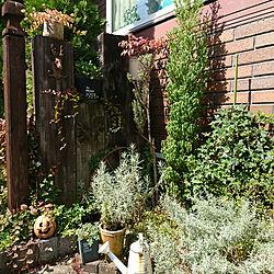 玄関/入り口/ガーデニング/庭/小さい庭/狭い庭...などのインテリア実例 - 2018-09-24 11:44:01