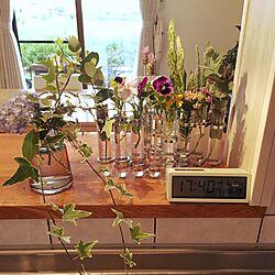 キッチン/試験管ベース/観葉植物/花のある暮らし/一輪挿し...などのインテリア実例 - 2017-06-10 17:42:55