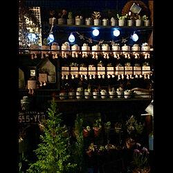 Room Clipとの出会いに感謝✳︎/ガーデニング/多肉植物/植木鉢/花のある暮らし...などのインテリア実例 - 2019-03-28 19:30:02