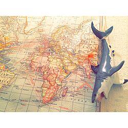 バス/トイレ/ポスター/世界地図/サメ/一人暮らし...などのインテリア実例 - 2015-05-29 00:27:15