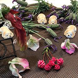 荒地の庭を散策。/杖の生活を楽しむ✩.*˚/カルミア/いぬ雑貨/ブーゲンビリアの花びら...などのインテリア実例 - 2019-05-18 15:20:27
