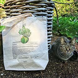 連続投稿すみません/植物のある暮らし/ボタニカル/猫のいる日常/植物が好き...などのインテリア実例 - 2020-02-05 09:32:12