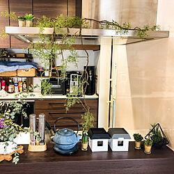 一度も使ってない南部鉄器/生きてる植物は飾れない…/消臭効果あり/フェイクグリーン/TOTO...などのインテリア実例 - 2020-12-21 16:30:01