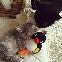 ベッド周り/ペット/猫/黒猫のインテリア実例 - 2015-04-18 13:21:06
