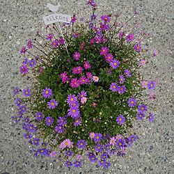 玄関/入り口/花のある暮らし/ガーデニング初心者/植物のある暮らし/庭...などのインテリア実例 - 2019-07-13 10:19:00