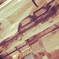 棚/ヒョウモントカゲモドキ/レオパードゲッコー/簡易温室/小部屋の中...などのインテリア実例 - 2017-12-24 00:06:39