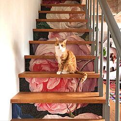 Eijffinger/階段/ねこのいる日常/ねこと暮らす。/猫と暮らす...などのインテリア実例 - 2021-03-25 19:09:41