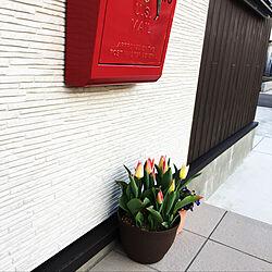 玄関/入り口/チューリップのインテリア実例 - 2018-03-30 06:17:27