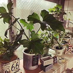 RoomClipアンケート/3COINS/ダイソー/セリア/観葉植物...などのインテリア実例 - 2019-12-02 11:33:59
