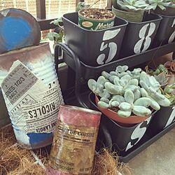リメ缶/IKEA 植木鉢/多肉植物/死にそうなシュガーパインのインテリア実例 - 2014-09-06 16:43:59