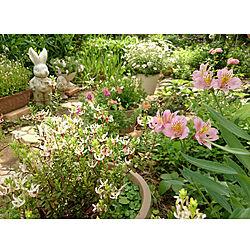 玄関/入り口/メルヘンガーデン/ツルコケモモの花/クランベリーの花/物語のある庭...などのインテリア実例 - 2020-06-03 15:30:38