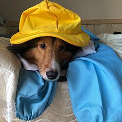机/インテリアじゃなくてごめんなさい/シェルティー/愛犬と暮らす家/コスプレ...などのインテリア実例 - 2018-11-16 03:43:13