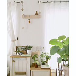 棚/観葉植物/ラナンキュラス/インドアグリーン/花瓶...などのインテリア実例 - 2018-03-05 20:30:30