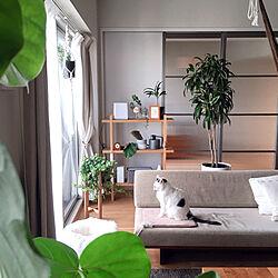 ソファ/ホットカーペット/自然素材/グリーンのある暮らし/すっきり暮らしたい...などのインテリア実例 - 2020-01-11 13:05:57