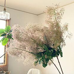 観葉植物/キッチンのインテリア実例 - 2019-05-17 17:52:01