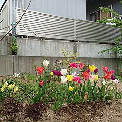 玄関/入り口のインテリア実例 - 2020-05-04 19:36:40