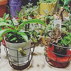 キッチン/お気に入りの場所/マンション暮らし/いつもいいねやコメありがとうございます♡/食虫植物...などのインテリア実例 - 2018-07-01 23:43:45