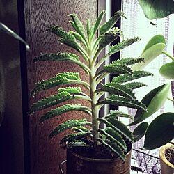 壁/天井/サビ缶/多肉植物/植物/ハカラメのインテリア実例 - 2013-09-26 09:23:57