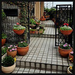玄関/入り口/ガーベラ大好き/狭い庭のインテリア実例 - 2016-04-10 21:44:09