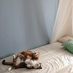 Francfrancクッションカバー/猫に癒される毎日♡/ハナ(=^x^=)/セミシングルベッド/次女の部屋...などのインテリア実例 - 2021-08-09 07:59:31