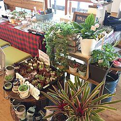 机/ブライワックス/アンティークワックス/花のある暮らし/観葉植物...などのインテリア実例 - 2017-05-08 23:04:54