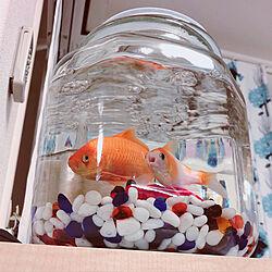 ガラスジャー/ニトリ/1歳/お祭りの金魚/金魚水槽...などのインテリア実例 - 2020-08-11 21:28:20
