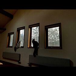 縦滑り出し窓/ペットと暮らすインテリア/ピクチャーウィンドウ/珪藻土の壁/猫と暮らす...などのインテリア実例 - 2021-05-06 20:08:48
