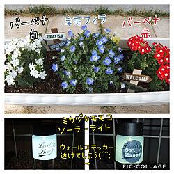 玄関/入り口/庭/バーベナ/ネモフィラ/お花のある暮らし...などのインテリア実例 - 2019-04-23 09:54:09