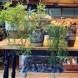 植木鉢/ねこのいる日常/リプサリス/ペットと暮らす家/観葉植物のインテリア実例 - 2020-03-04 08:14:25