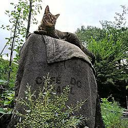 連続投稿すみません/cat/キジトラ/きじとら/インテリアじゃなくてごめんなさい...などのインテリア実例 - 2019-09-01 21:45:01