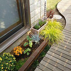 玄関/入り口/LIXIL/お庭♪/DIYウッドデッキ/DIY庭...などのインテリア実例 - 2017-06-10 16:25:22